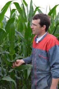 éleveur dans le maïs - devenir éleveur métier