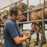 le métier d'éleveur caprin