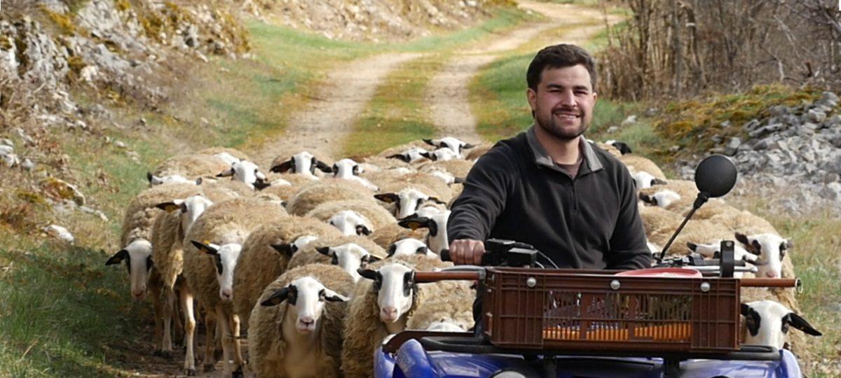 le métier d'éleveur ovin