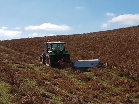 En octobre Marion, éleveuse correspondante de Devenir Eleveur, a fauché la fougère pour la litière de ses animaux. Elle a un métier d'éleveuse de brebis laitières.