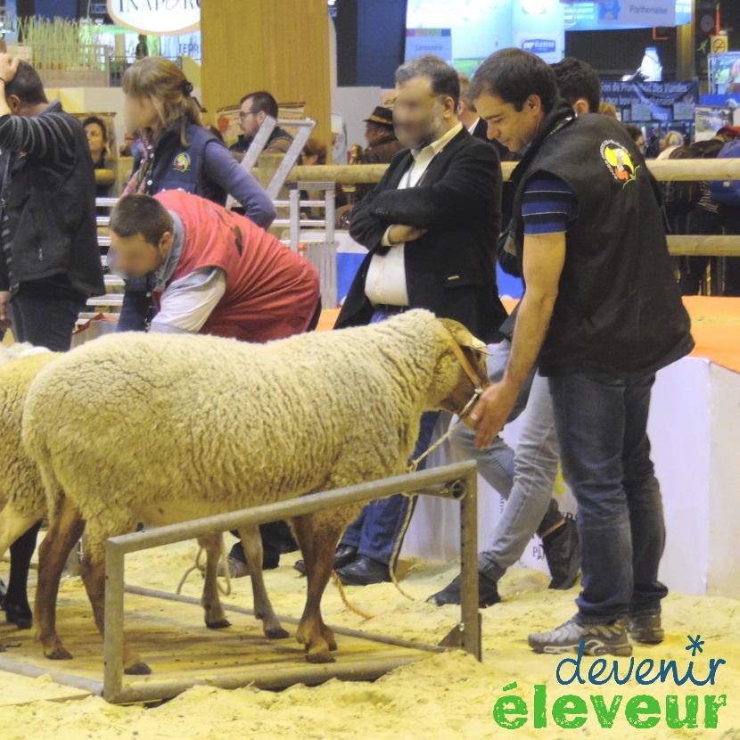 guilhem devenir eleveur ovin mouton mourerous