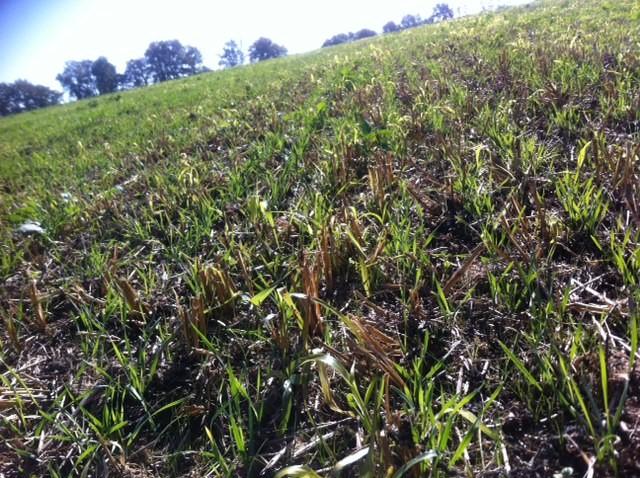 En octobre Matthieu éleveur de vaches allaitantes a fait des semis de céréales et métail. Devenir éleveur de vaches allaitantes viande