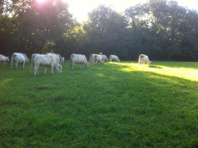 matthieu devenir éleveur bovin allaitant paturage