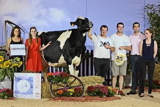 concours vaches laitière devenir éleveur
