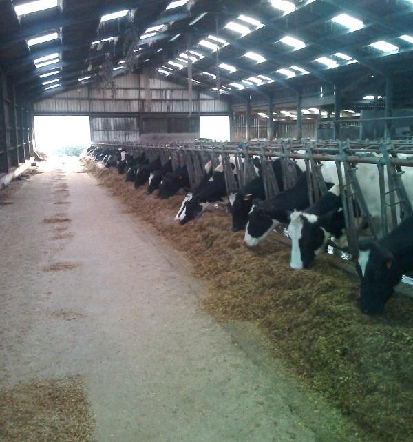 gabriel adapte l'alimentation de ses vaches pour l'hiver