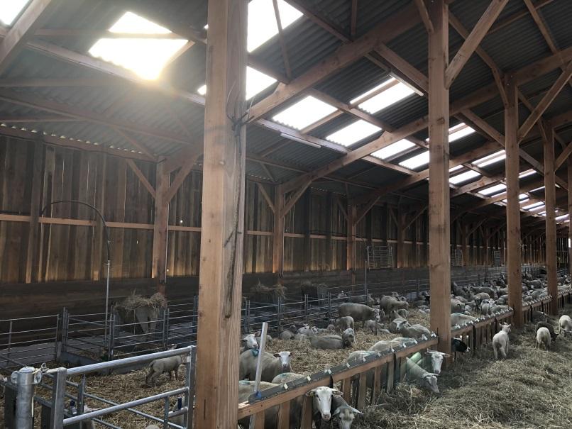 Nicolas a démarré dans son nouveau poste de responsable de l'atelier ovin